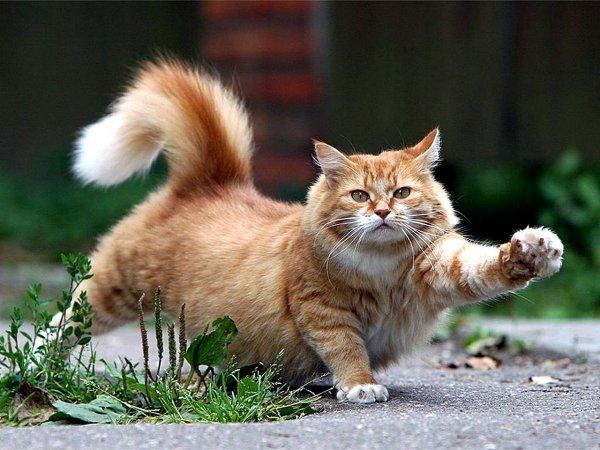 Восемь самых необычных кошачьих повадок