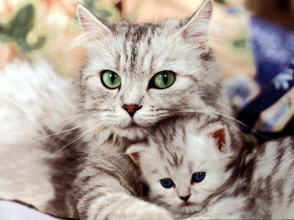 Интересные факты и мифы о кошках