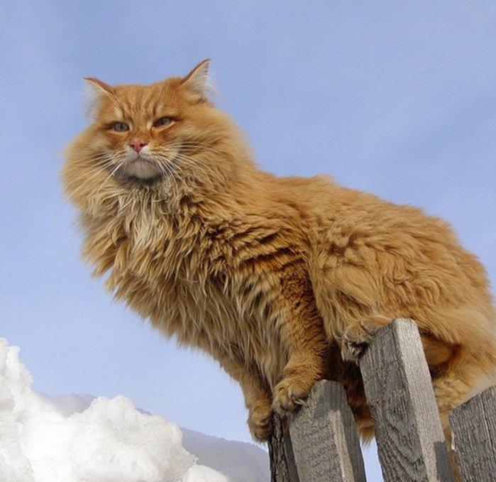 Почему кошки приземляются только на лапы