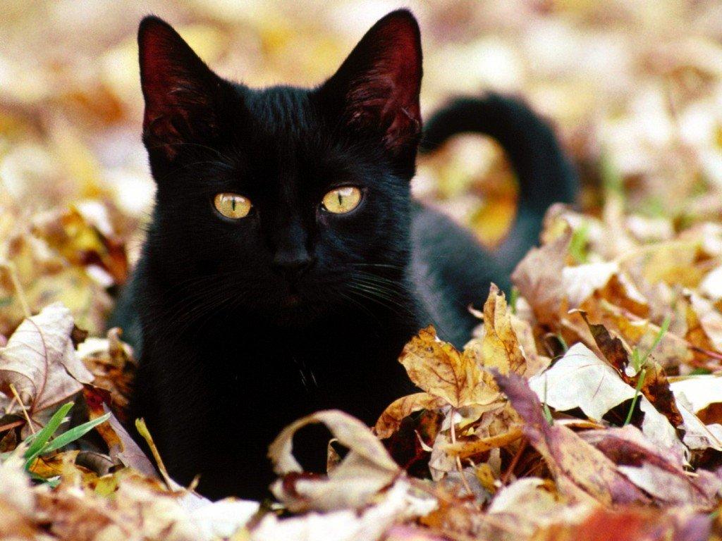 «Говорят не повезет, если черный кот дорогу перейдет…»