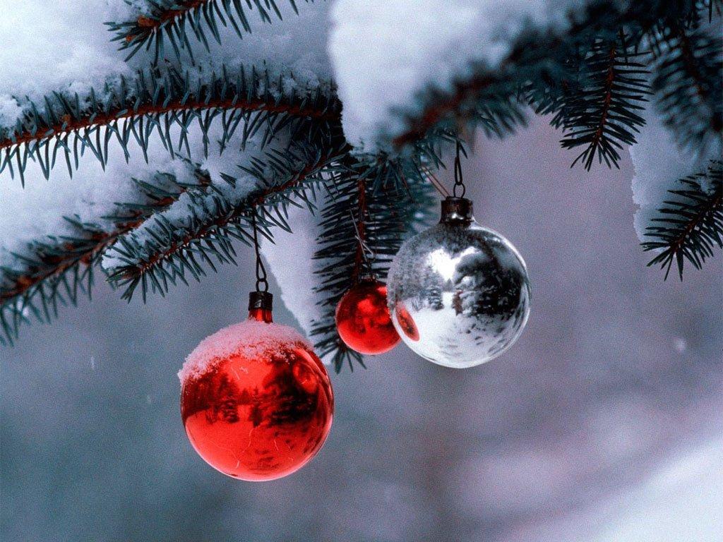 Как выбрать новогоднюю ёлку и продлить её жизнь?