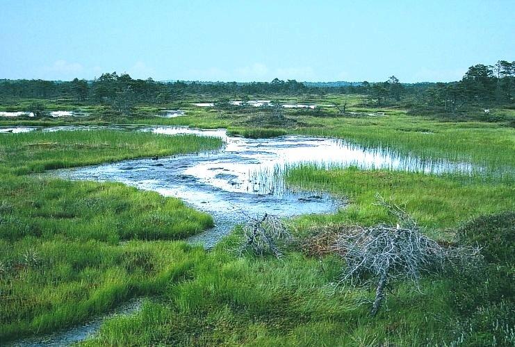 Как безопасно перейти через болото
