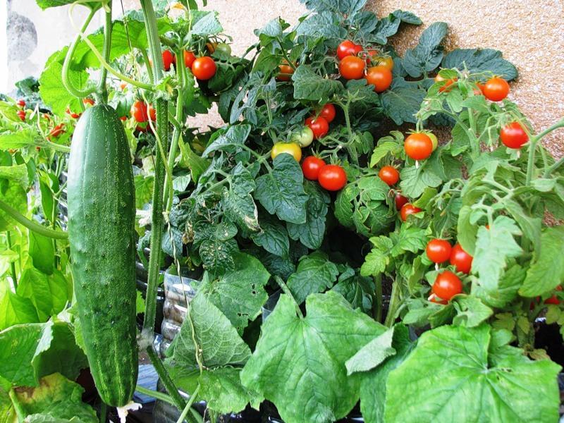 Выбор удобрения огорода