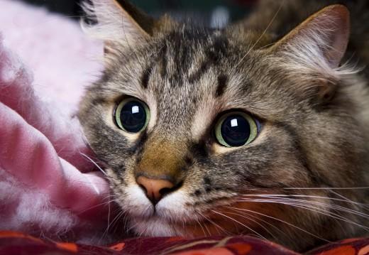 Поговорим о фелинотерапии: лекарские таланты кошек