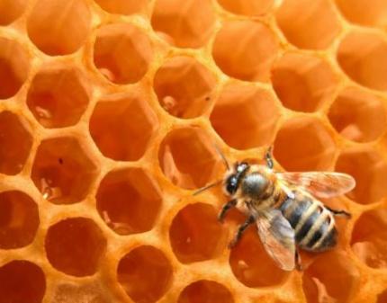 Продажа продуктов пчеловодства через интернет
