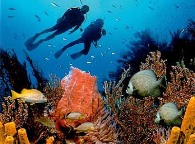 Прелесть подводного мира