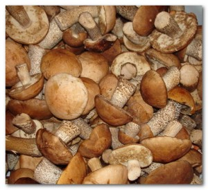 Как правильно замораживать белые грибы?