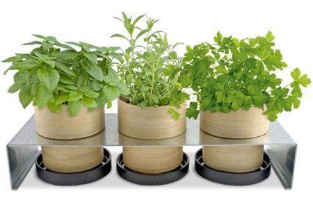 Можно ли вырастить специи в домашних условиях?