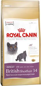 Особенности выбора питания для кошек