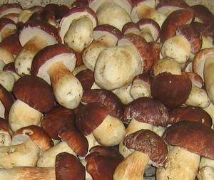 Приготовим вкусные постные супы с грибами
