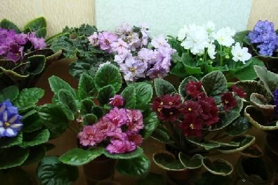 Как влияют комнатные растения на людей и энергетику дома