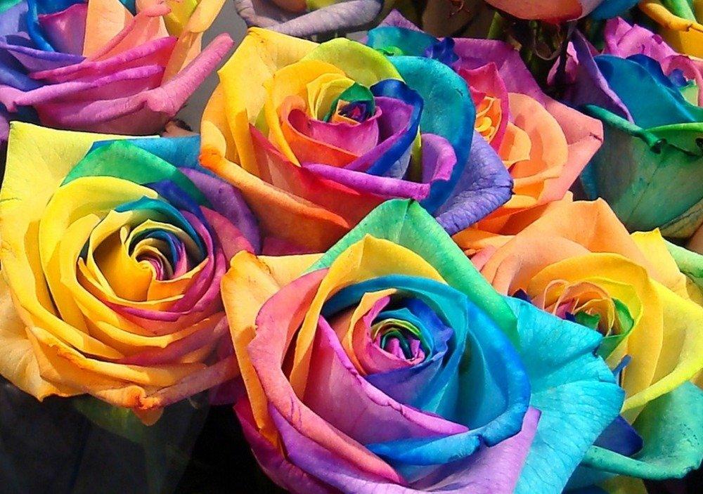 Тюльпана цветок фото