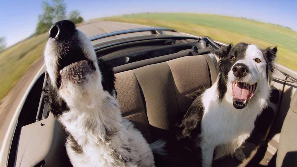 Предстоит поездка. Брать домашнее животное с собой или оставить на время?