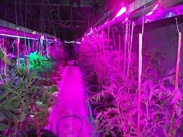 Использование светодиодных ламп для растений