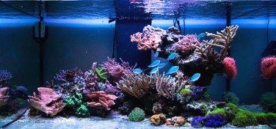 Живой или мёртвый, или какие кораллы выбрать для аквариума
