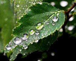 Созданы сборщики росы для растений