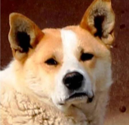 Пять заблуждений о собаках