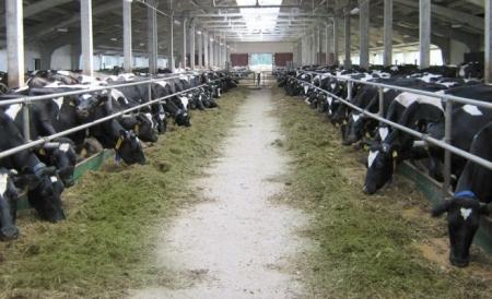 В Татарстане за пять лет построили животноводческие объекты на 89 млрд рублей