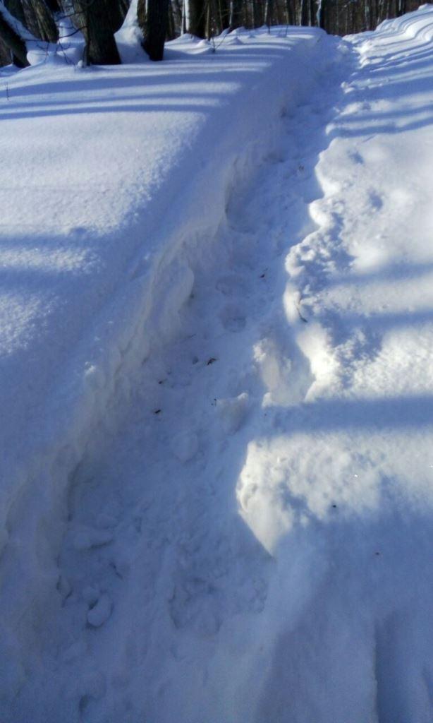Присоединяйся к лыжникам!