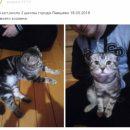 Мартовский кот решил погулять и… потерялся