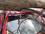 Упавшее дерево раздавило несколько автомобилей