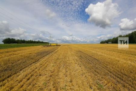 Минсельхозпрод РТ: Татарстан обеспечен семенами на 106 процентов
