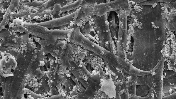Ученые создали целлюлозу прочнее стали