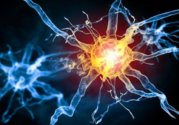 Британские ученые научились быстрее восстанавливать нервные клетки