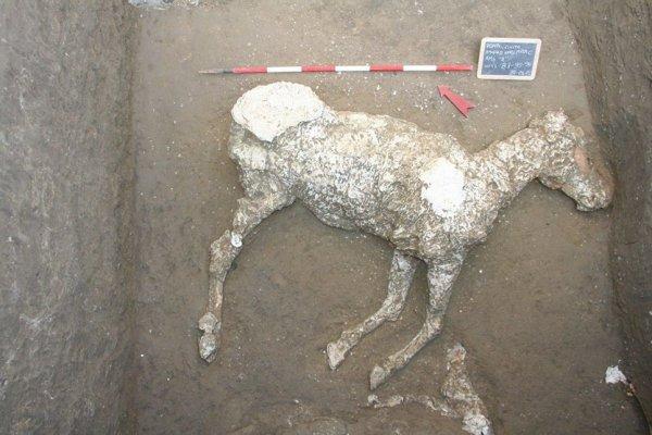 Археологи нашли останки погребенной 2 000 лет назад под лавой лошади в Помпеях