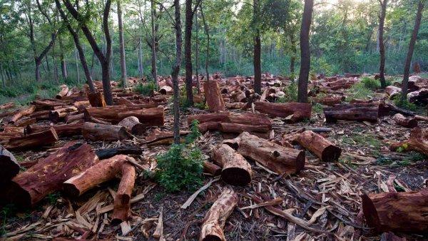 Учёные: Человек повлиял на треть природоохранных зон Земли
