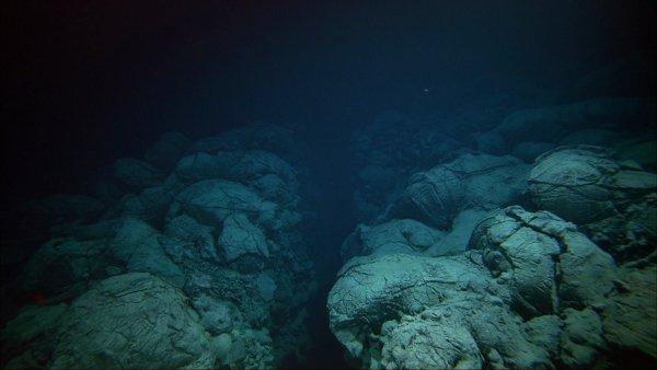 Учёные показали, кто скрывается в глубинах Марианской впадины