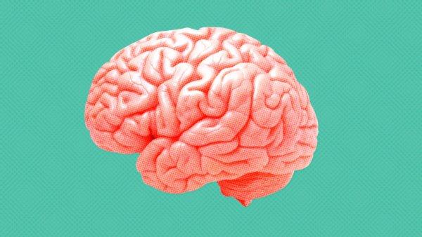 Ученые установили связь дохода человека с функциональностью его мозга