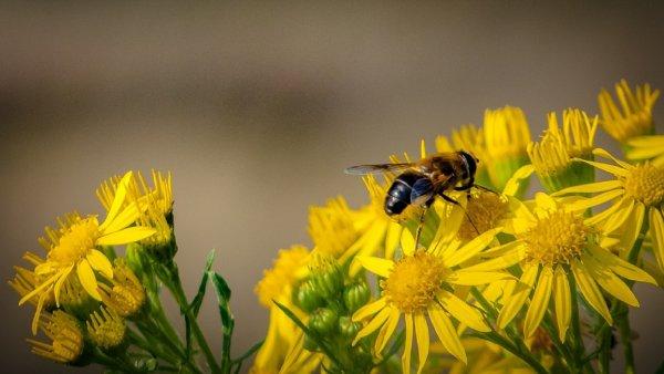 Ученые рассказали об угрозе вымирания пчел на Земле и последствиях для людей