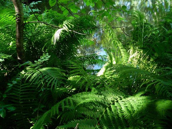 Перепись биосферы: Больше всего на планете весят растения