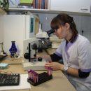 Ученые: Наркоз усыпляет не только людей, но и растения