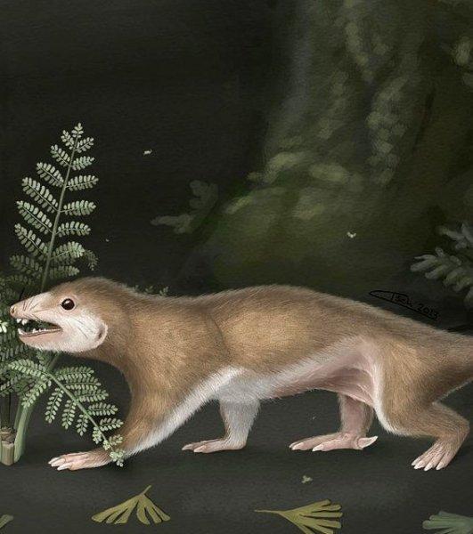 Ученые заявили об изменении времени существования Пангеи из-за удивительной находки