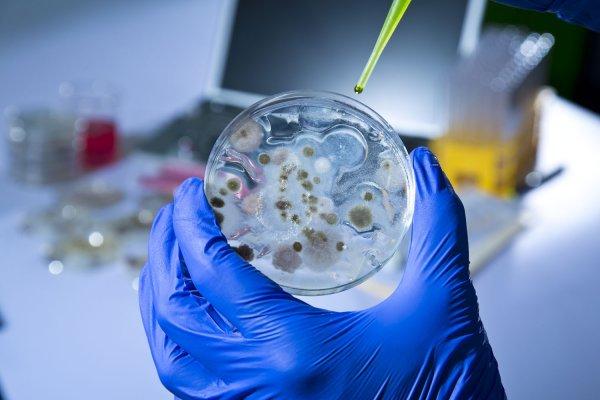 Ученые: Глобальное потепление создаст неубиваемые антибиотиками бактерии