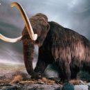 Ученые возродят шерстистых мамонтов и саблезубых тигров