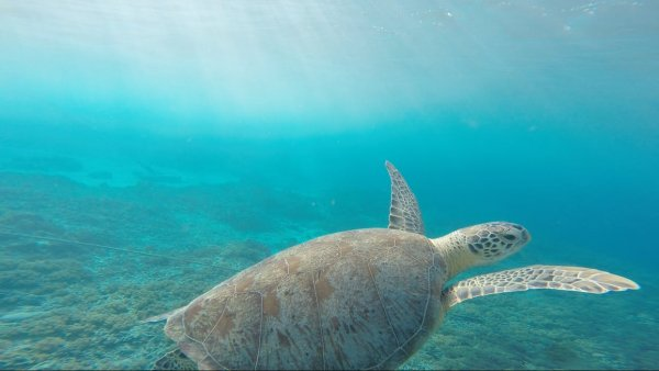 Ученые: Окисление океанов привело к развитию морской и земной жизни