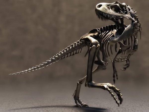 В Париже скелет редчайшего динозавра ушел с молотка за два миллиона евро