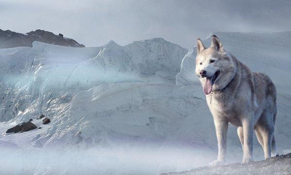 Крымские ученые предсказали наступление ледникового периода