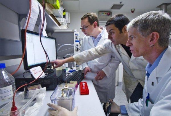 Ученые из России и США создали механизм оценки развития мозга у плода беременных