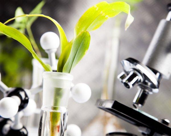 Ученые нашли в растениях наночастицы золота