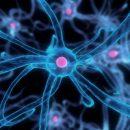 Ученые нашли клетки, способные восстановить весь организм
