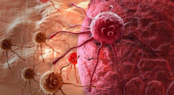 Учёные создали лекарство, останавливающее развитие рака