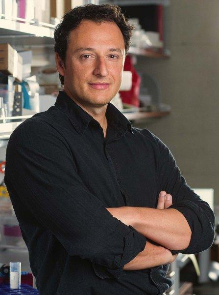 Американские ученые вырастили в лаборатории мини-мозг неандертальца