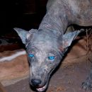 Ученые: ДНК анализ подтвердил существование чупакабры