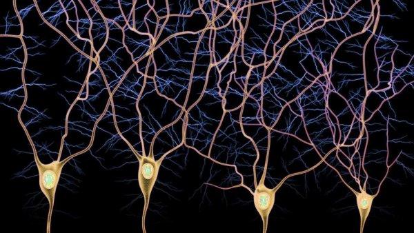 Учёные: новый белок сможет образовывать нейроны в искусственной среде
