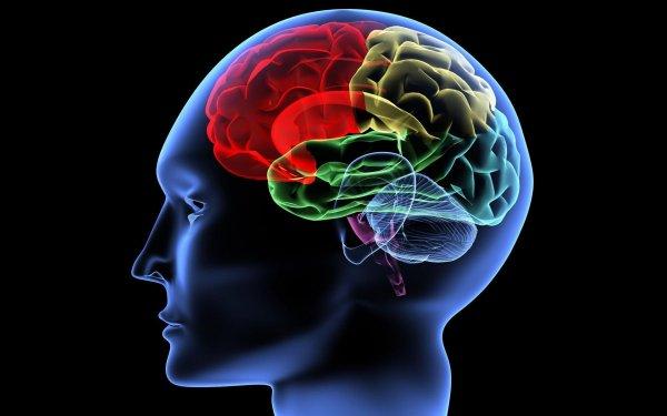 Учёные: Сканирование мозга определит ум человека