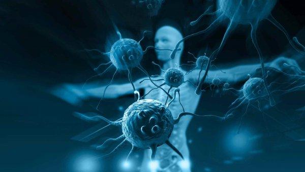Ученые нашли вирус, укрепляющий иммунитет